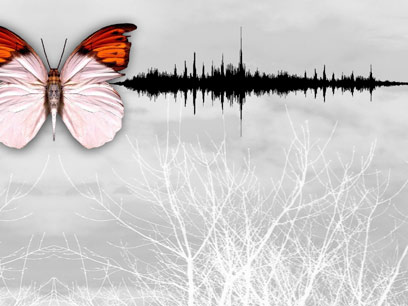 the_butterfly_effect2
